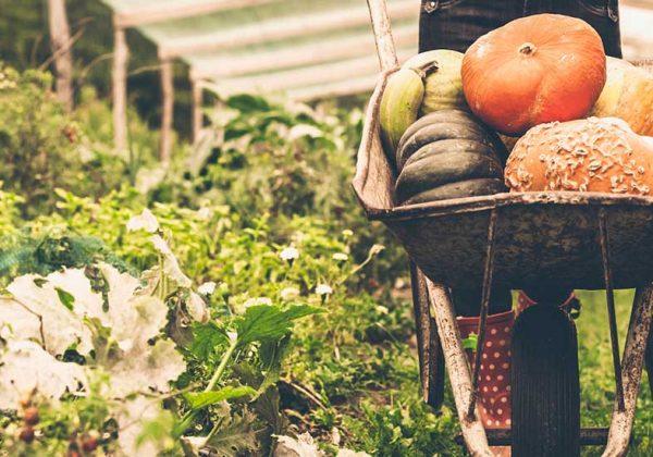 home-jardin-légume-autosuffisant-600x420
